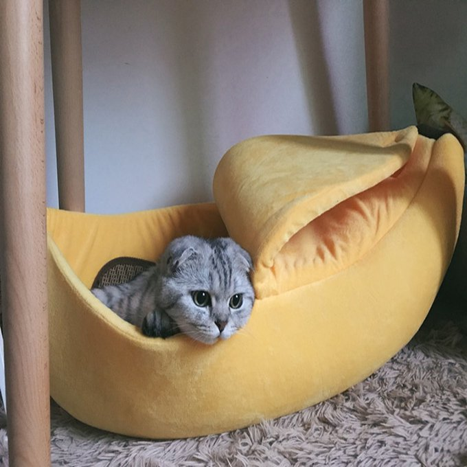 Banana Cat House