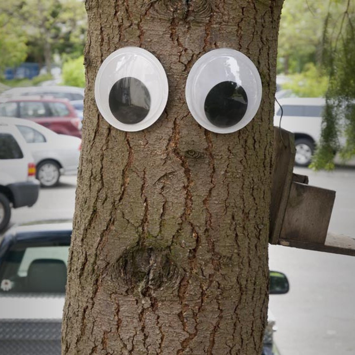 Giant Googly Eyes
