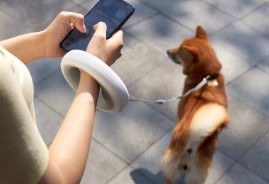 LED-Lit Dog Leash