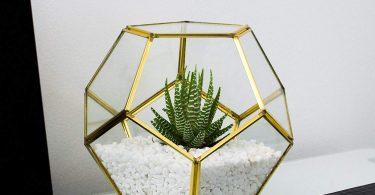 MOCTUS Glass Geometric Terrarium