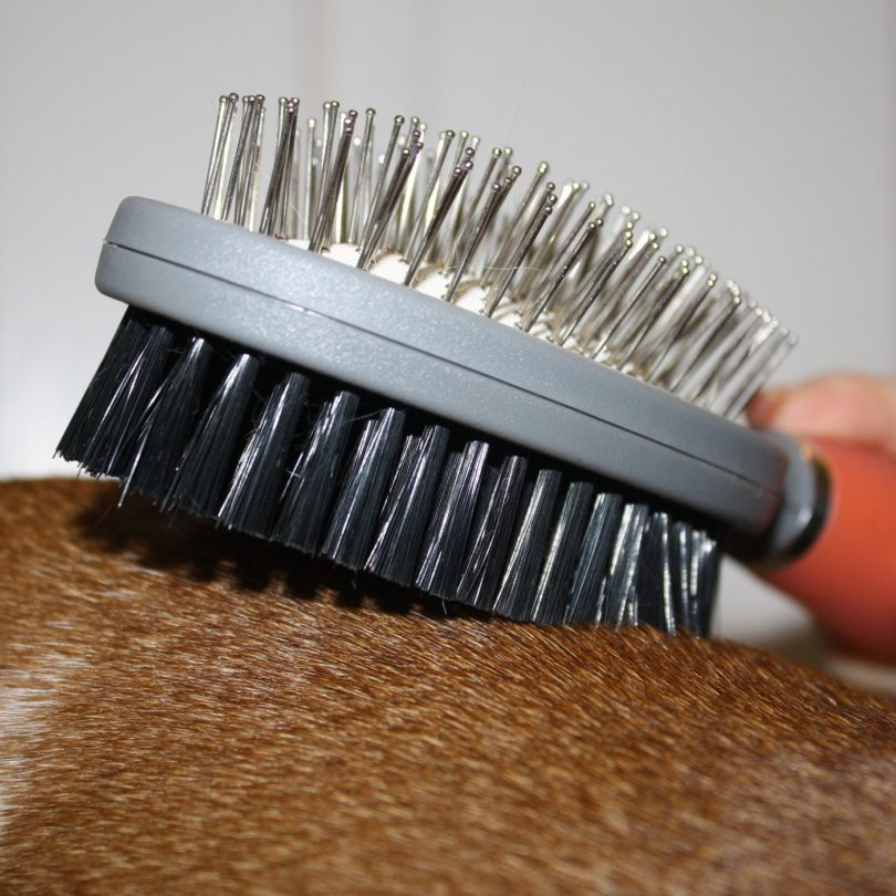 GoPets Professional Double Sided Pin and Bristle Brush for Dogs