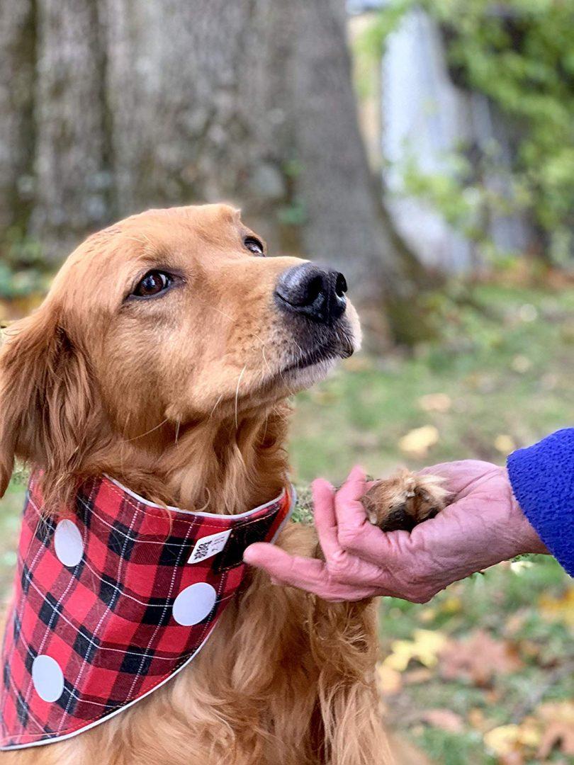 SPOT THE DOG! Easy Fastening Dog Bandana