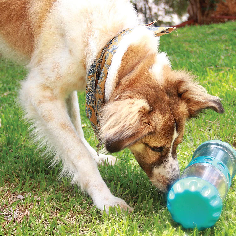 IQZoo The Intelligent Dog Feeder