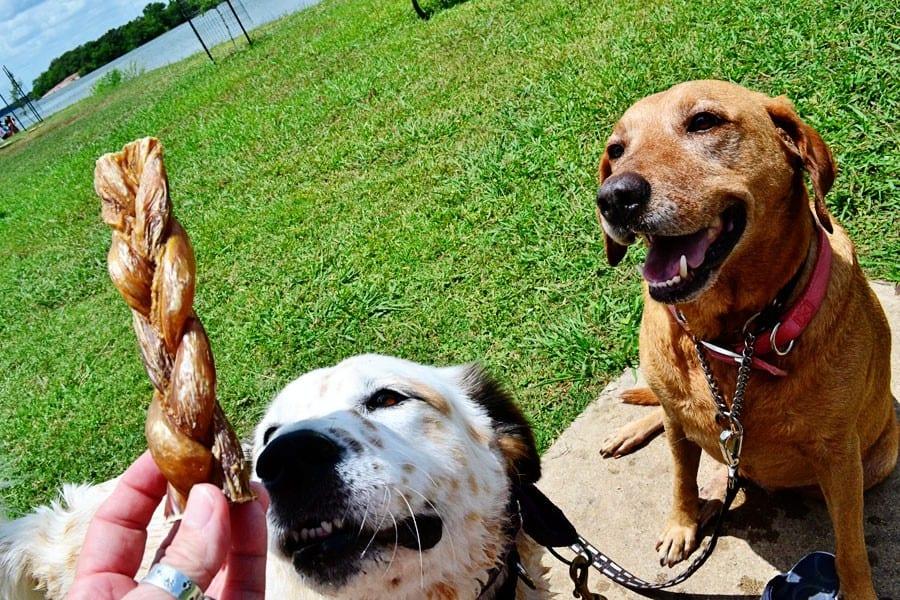 Barkworthies Braided Bully Sticks 100% Natural Beef Dog Treats
