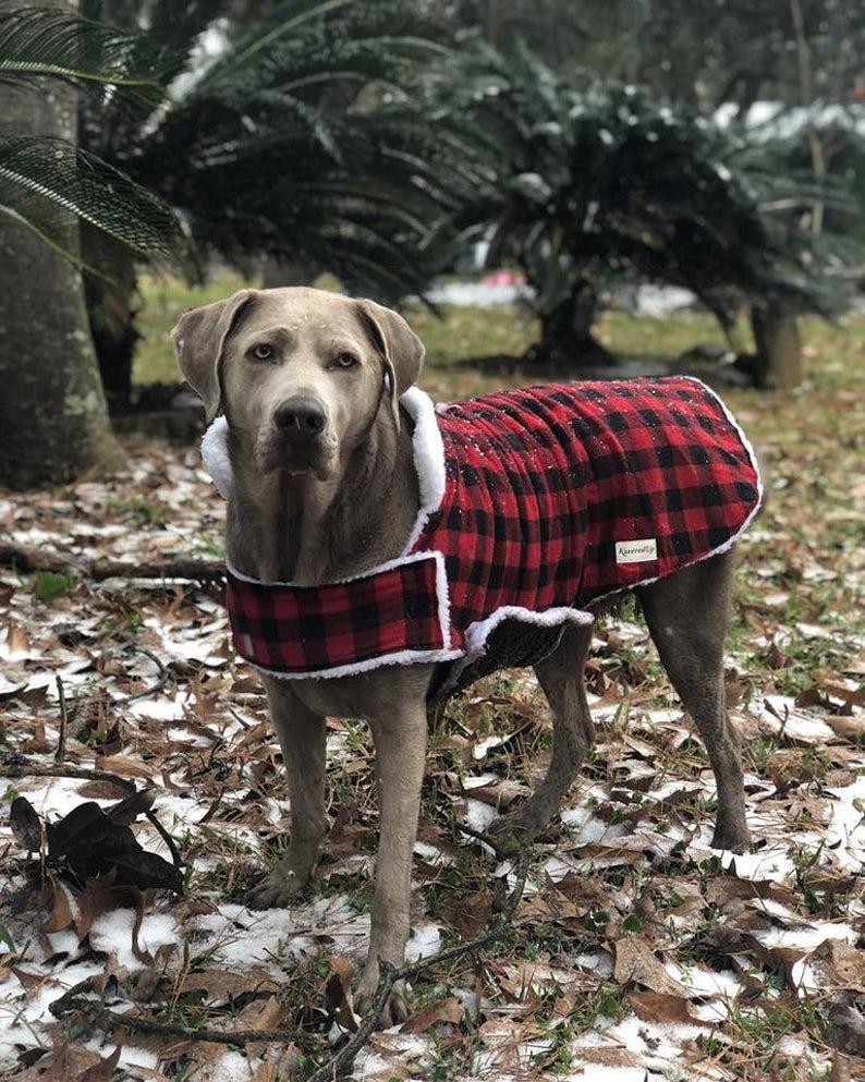 Custom Fitted Winter Pet Coat