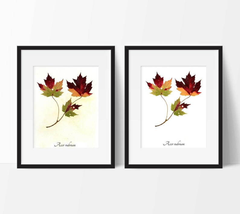 Red Maple Fall Leaves Botanic Print  Autumn Leaves Botanical