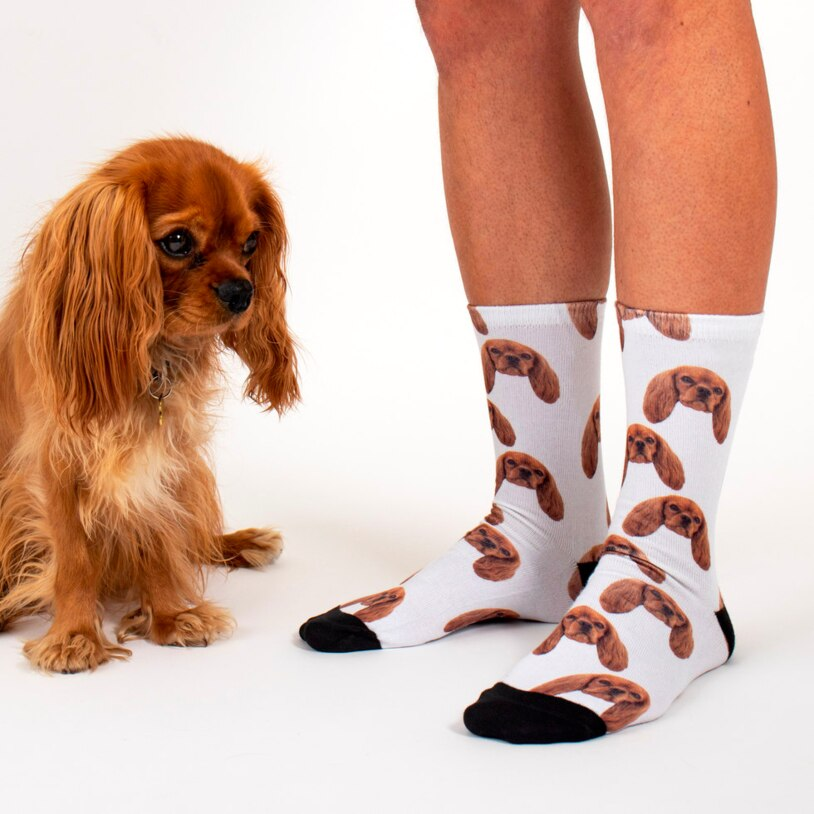 Sock Your Pet – Personalised Pet Socks