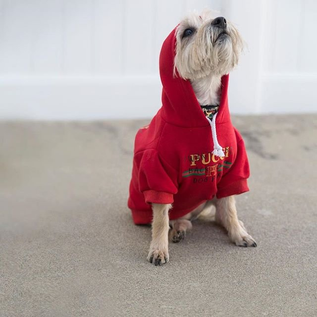 Pucci Dog Park Hoodie