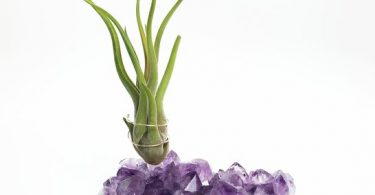 Large Amethyst Crystal Airplant Holder
