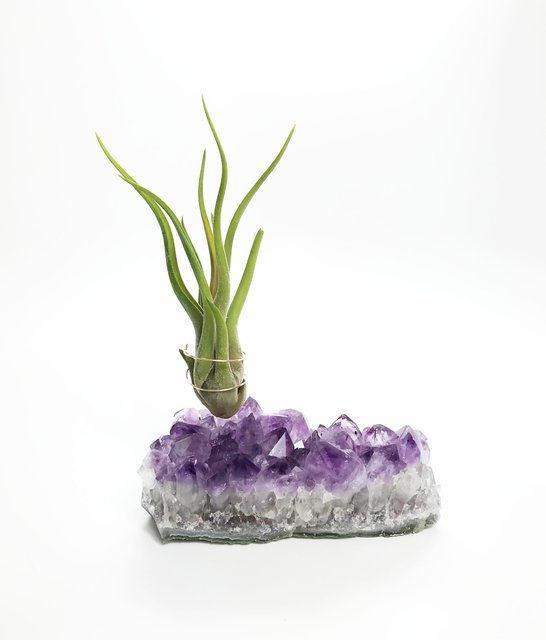 Large Amethyst Crystal Airplant Holder