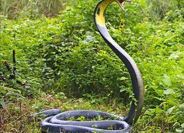 Life Size King Cobra Snake Statue