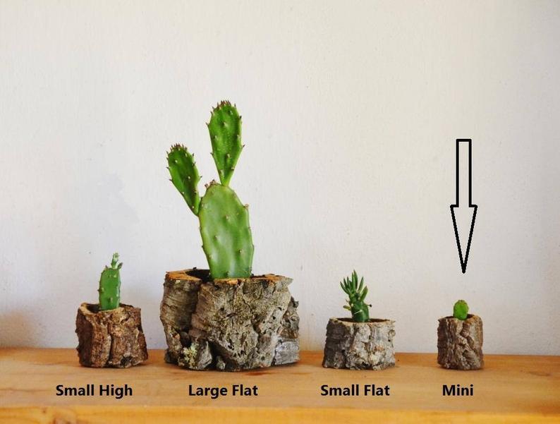 Mini Natural Cork Planter Handmade Organic and Eco-friendly
