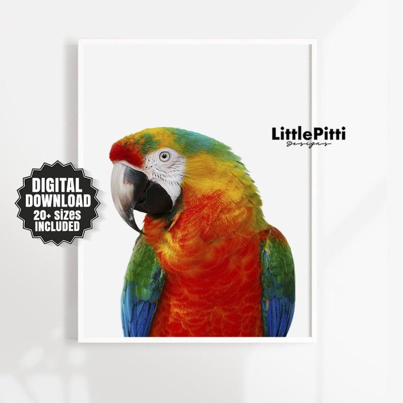 Parrot print tropical bird print parrot photo beautiful