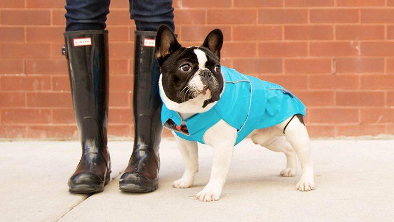 Django City Slicker Raincoat for Dogs