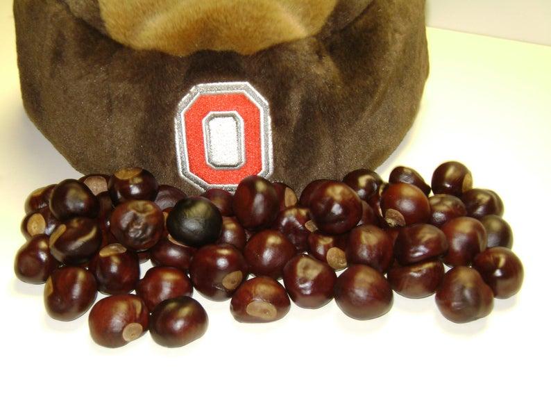 Ohio Buckeye Nuts New X-Large-1to 1 1/4