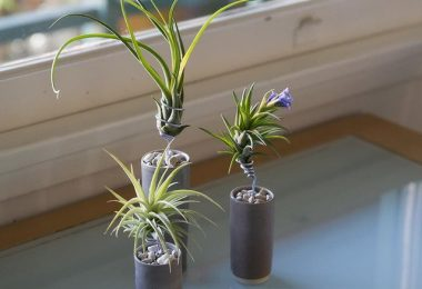 Glazed Ceramic AirplantVessel