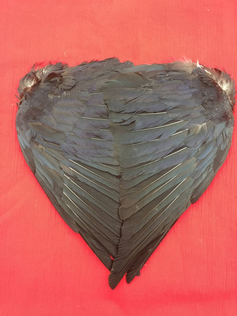 A Pair of English Carrion Crow Wings air dried. Ideal for