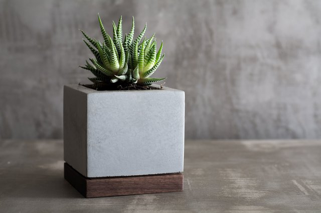 Planter in Concrete and Wood