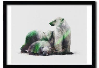 Arctic Polar Bear Family Print by Andreas Lie