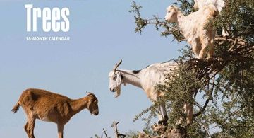 Goats in Trees 2018 Calendar